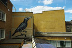 roa | rooftop | bird | london | ukingdom (15 votes)